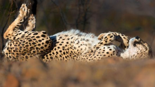 Encantadoras imágenes de animales tomando sol