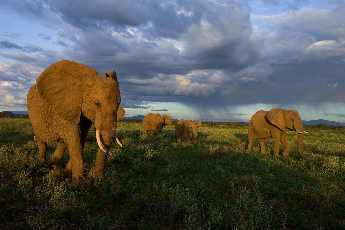 Un grupo de elefantes en el Parque Nacional Samburu, Kenia.