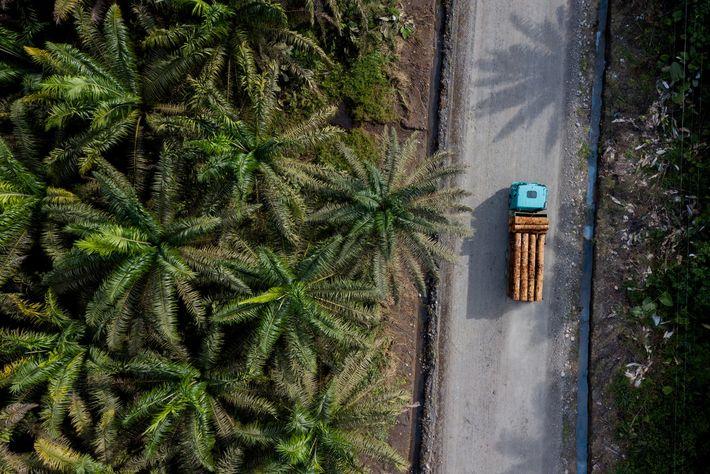 Según un informe de la FAO y el Banco Mundial de 2006, la tasa de deforestación ...