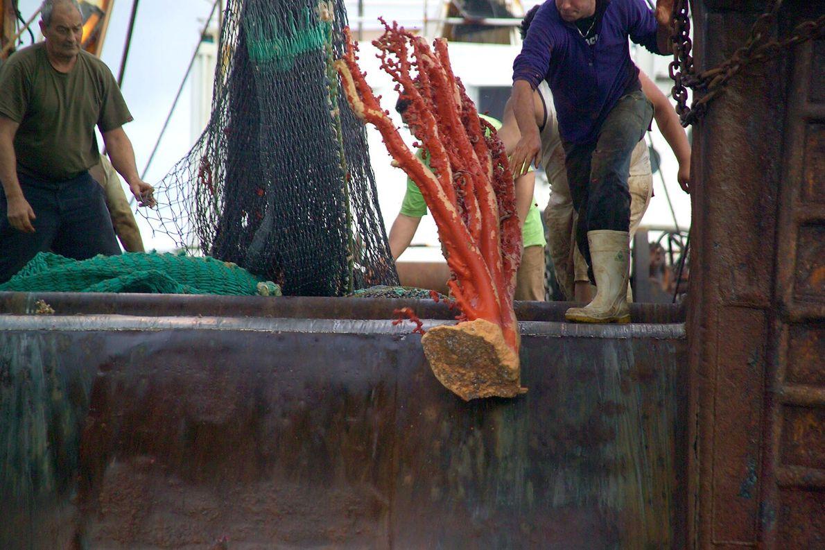 La pesca de arrastre es una de las prácticas pesqueras más destructivas. Comúnmente arrastra coral del ...
