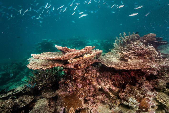 En 2018, luego de algunos de los años más calurosos que el arrecife haya experimentado, la ...