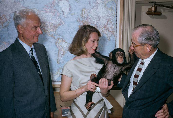Jane Goodall sostiene a un chimpancé llamado Lulu junto a miembros del equipo de National Geographic.