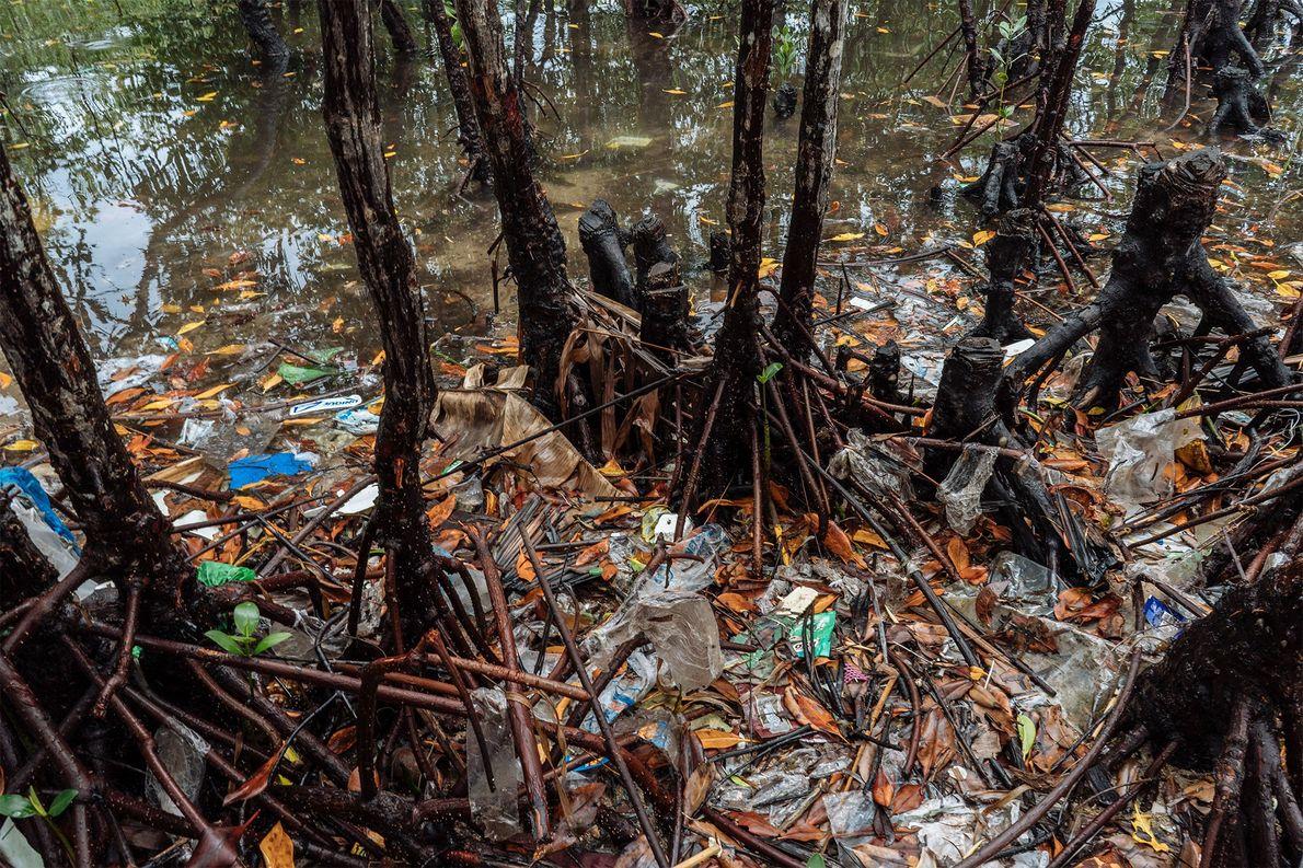 La basura obstruye las raíces de los manglares alrededor de Bohol.