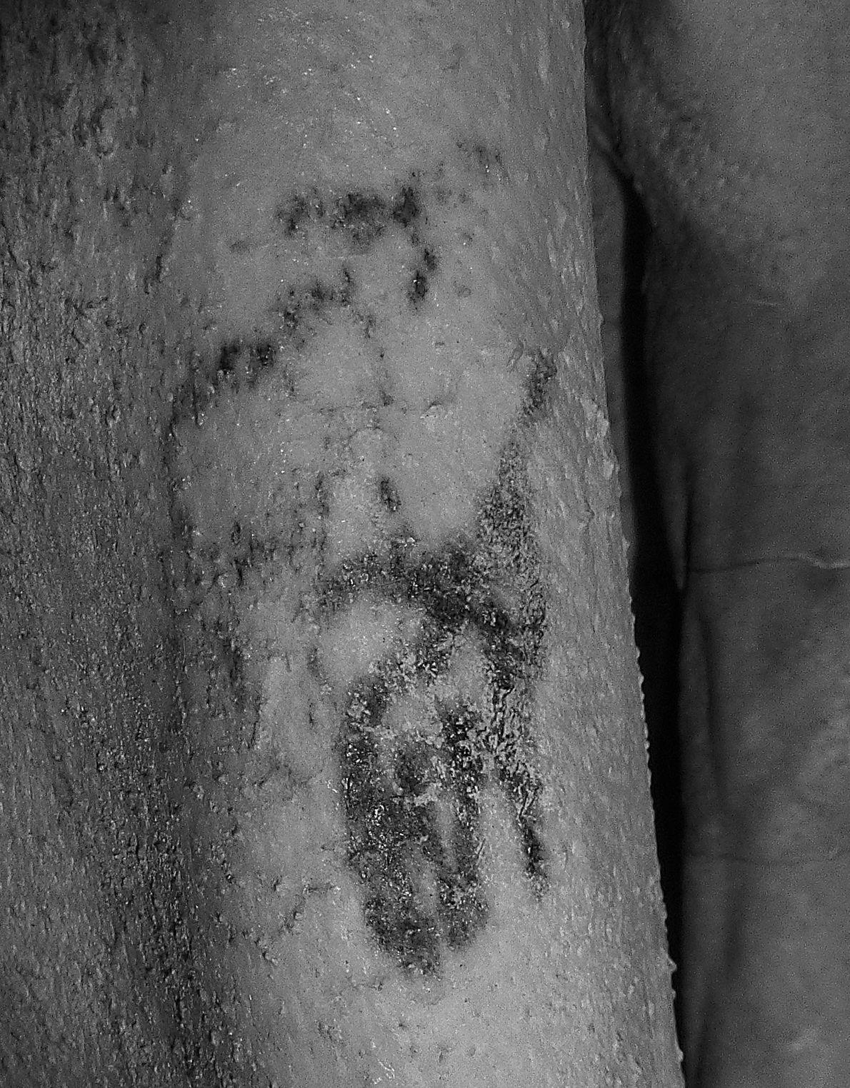 Bajo la luz infrarroja, los detalles del tatuaje en su piel de 5000 años de edad ...