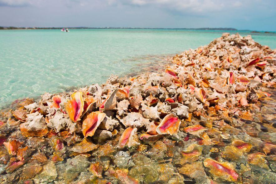 Pilas de conchas desechadas por personas que pescan estos moluscos únicamente por su carne. La carne ...