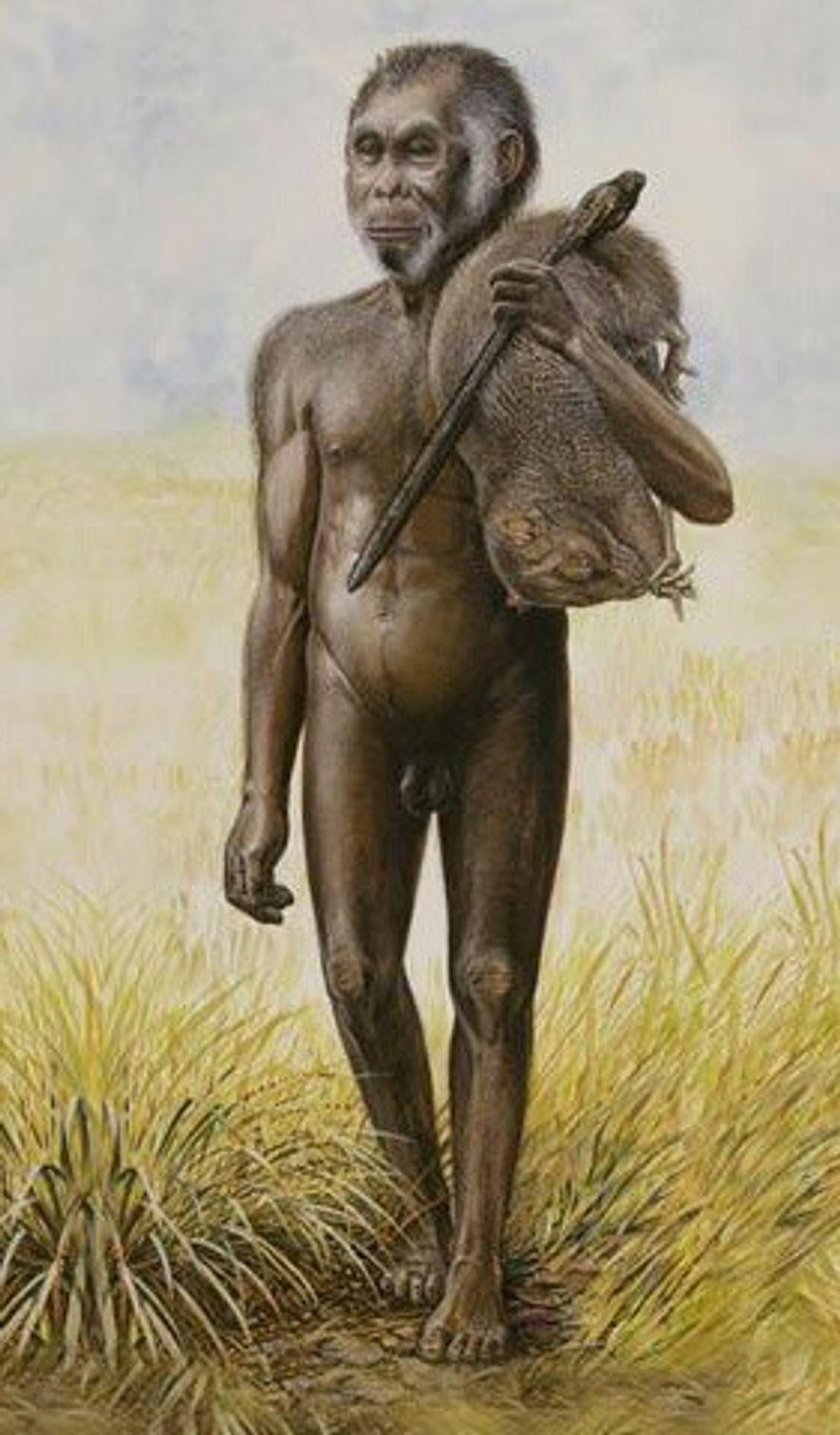 Una ilustración muestra a un hombre del H. floresinsis cargando una rata gigante sobre su hombro.