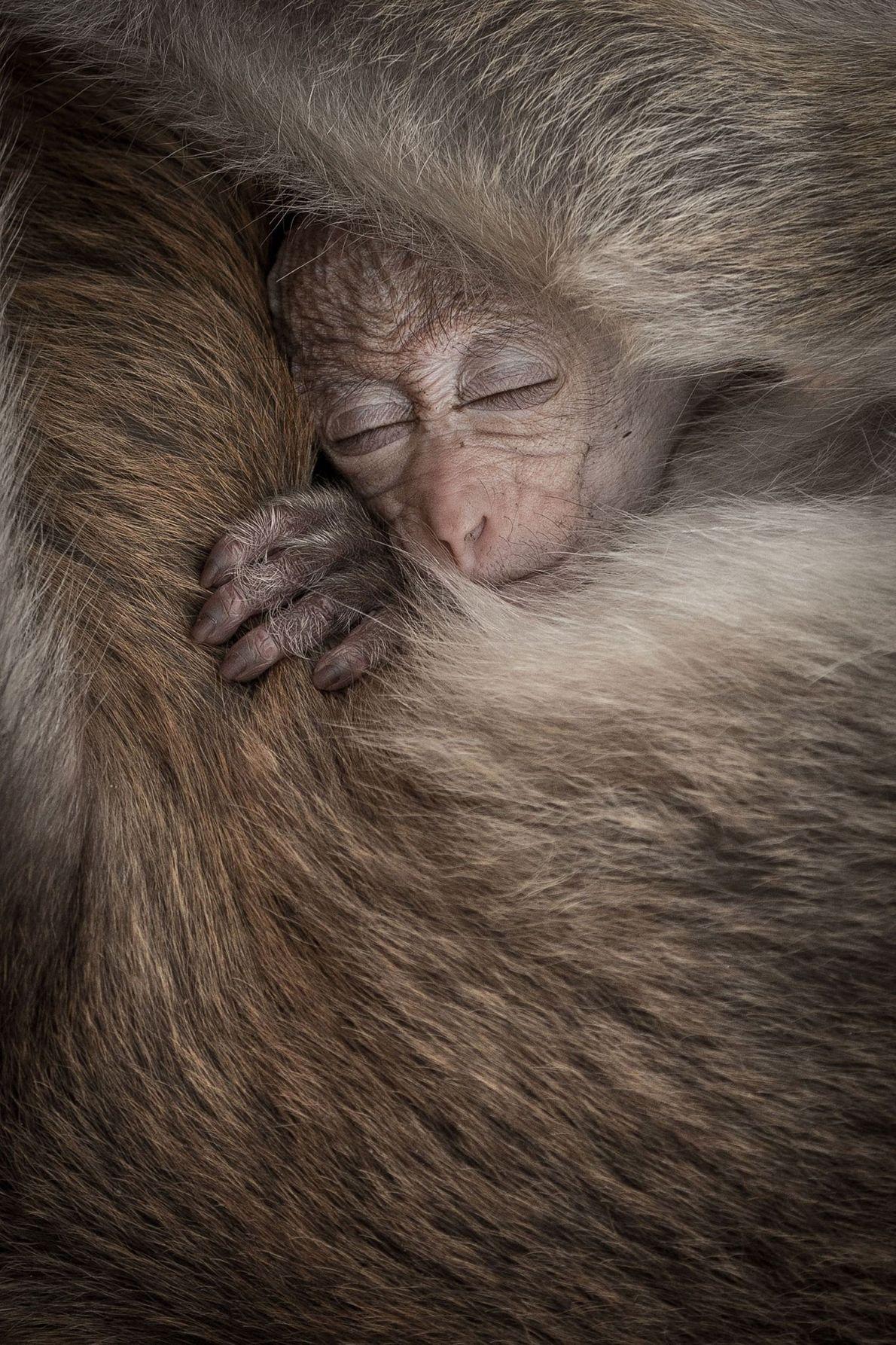 Senthi Aathavan Sethiverl, fotógrafo de Your Shot, capturó este momento entre un bebé mono y su ...