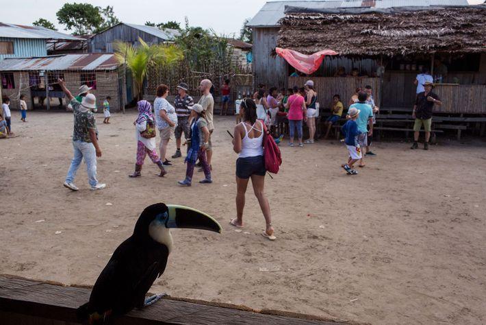 Detrás de un tucán en cautiverio, los visitantes compran comida y deambulan por el centro de ...