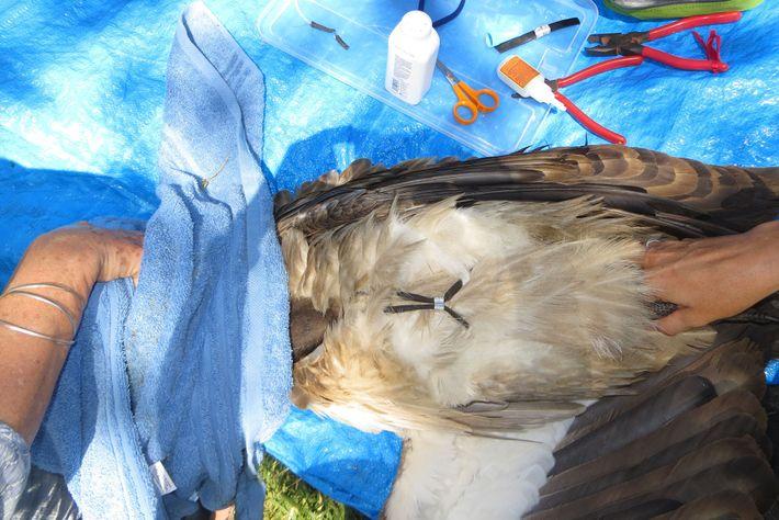03-ww-longest-vulture-migration