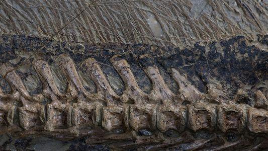 23 imágenes de fósiles de dinosaurios