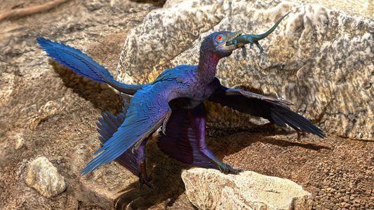 Hallan nueva especie de lagarto en el estómago de un fósil de dinosaurio