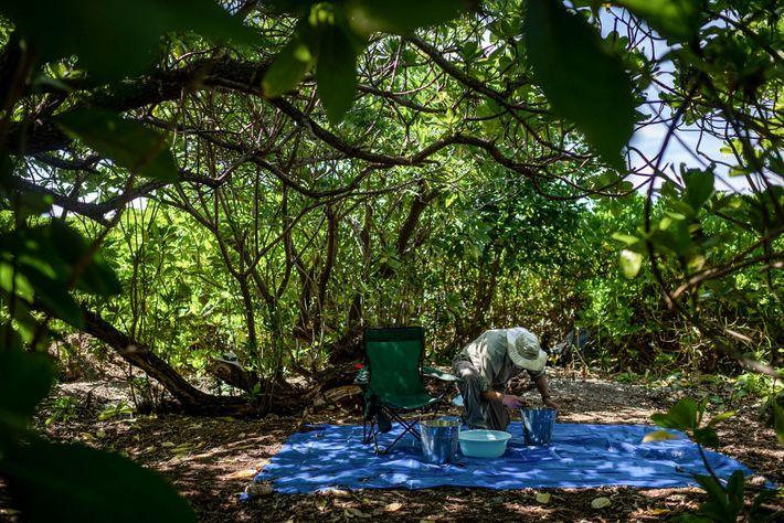 Tom King, ex arqueólogo jefe de TIGHAR, revisa el suelo recuperado de un sitio en Nikumaroro ...