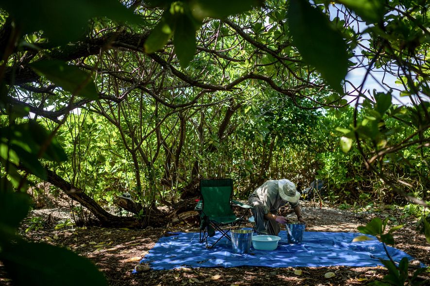 Tom King, ex arqueólogo jefe de TIGHAR, revisa el suelo recuperado de un sitio en Nikumaroro donde Earhardt podría haberse refugiado.