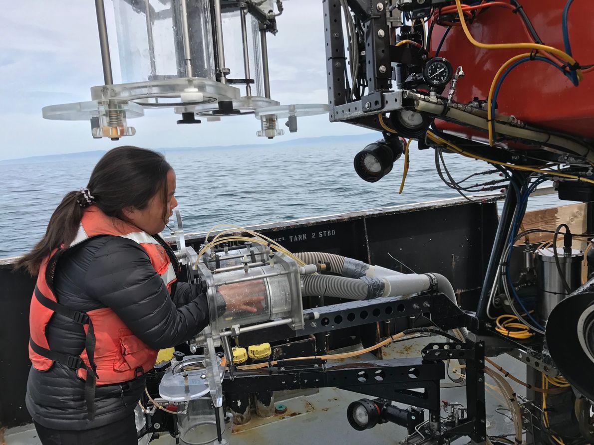 Anela Choy, profesora de oceanografía en la Institución de Oceanografía de Scripp en San Diego, fue ...