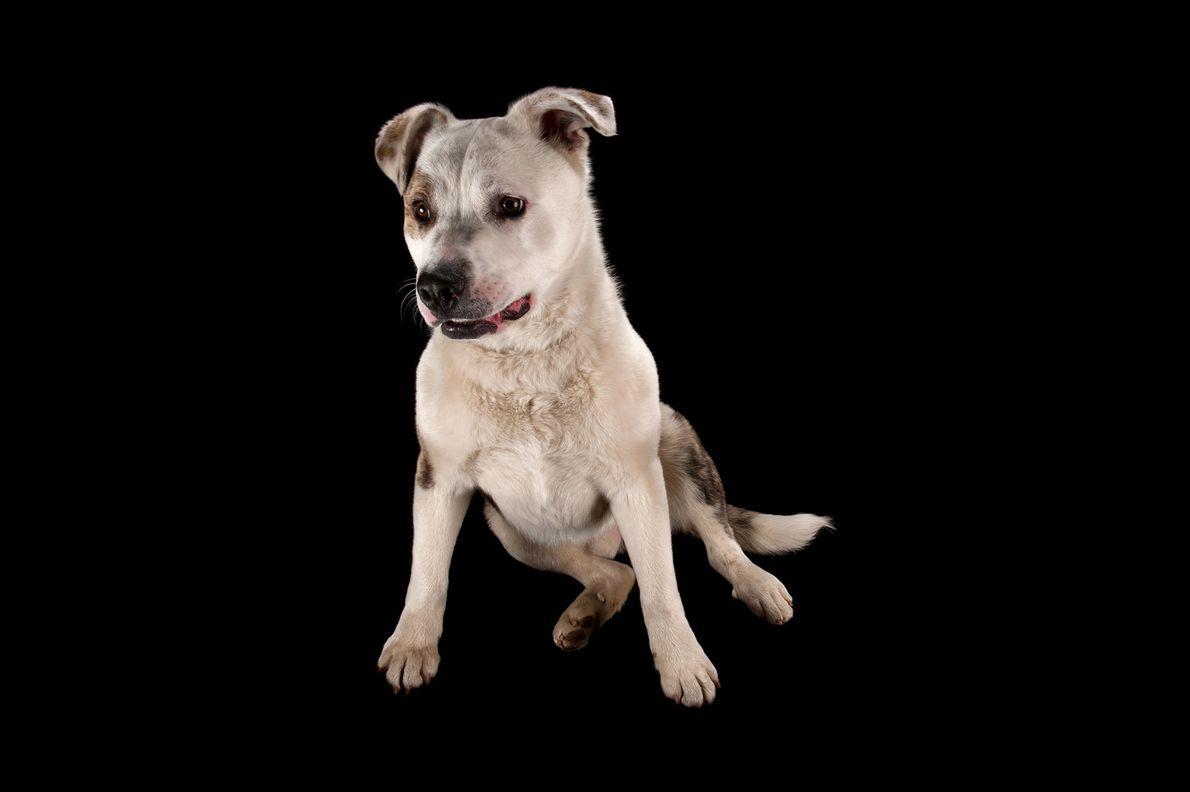 04-galeria-perros