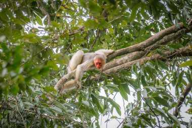 Además de ser fundamentales en el ciclo de las lluvias, los bosques tropicales albergan la mayor ...