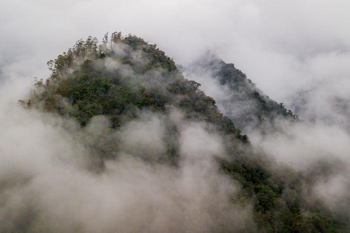 Los bosques tropicales del oeste de Ecuador forman parte de la región de Chocó, un punto ...