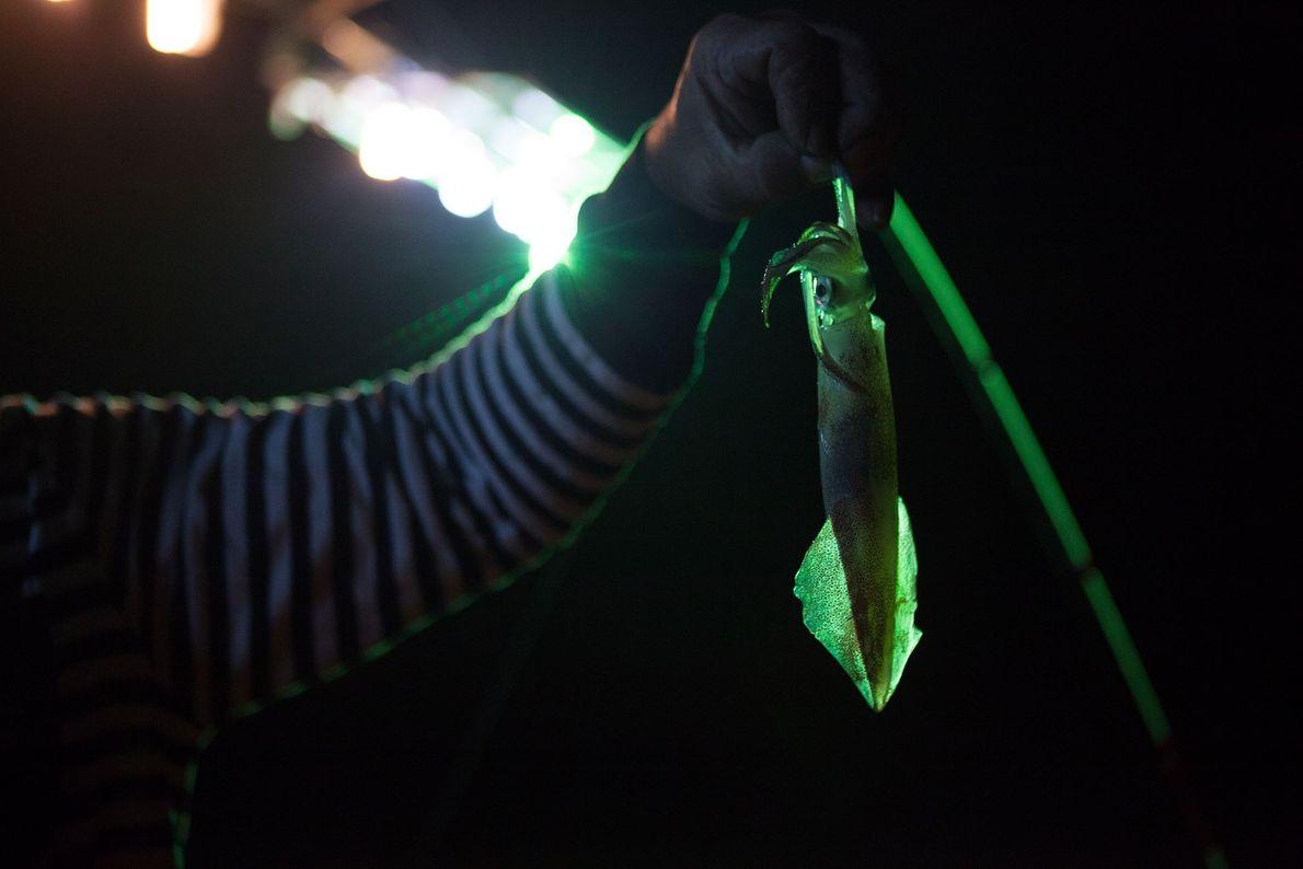 El estudio identificó a la pesca de calamar como práctica insostenible, pero financiada por el gobierno. ...
