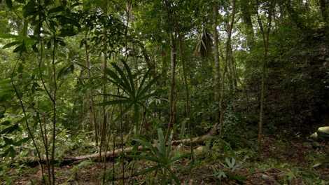 A simple vista solo se ve la jungla y un montículo cubierto de vegetación, pero con ...