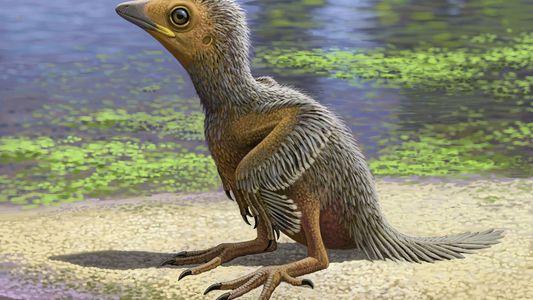 Hallan fósil de una cría de ave de 127 millones de años