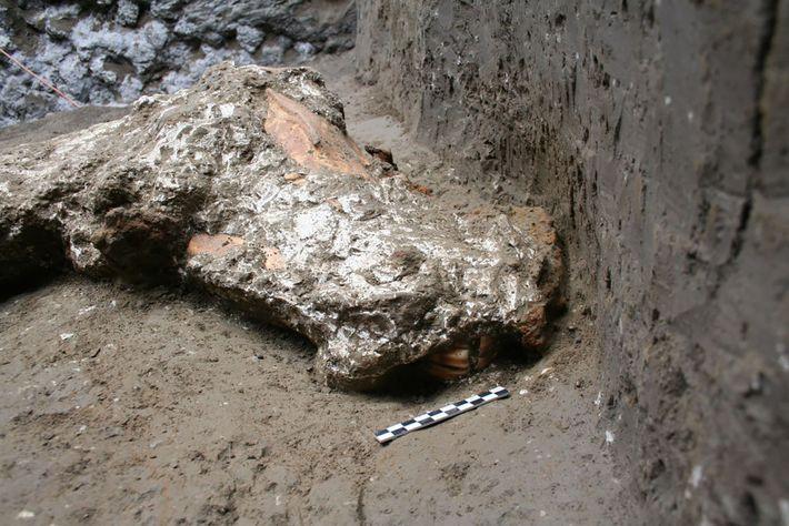 Se hallaron pruebas de fragmentos de cuero de bridas y riendas decoradas con ornamentos metálicos alrededor ...
