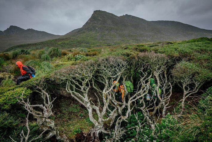 En algunos lugares, la maleza y las plantas son tan espesas que los investigadores deben moverse ...
