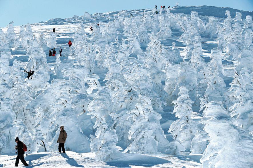 Estos árboles cubiertos de hielo, conocidos como monstruos de nieve, transforman al centro de esquí Zao, ...