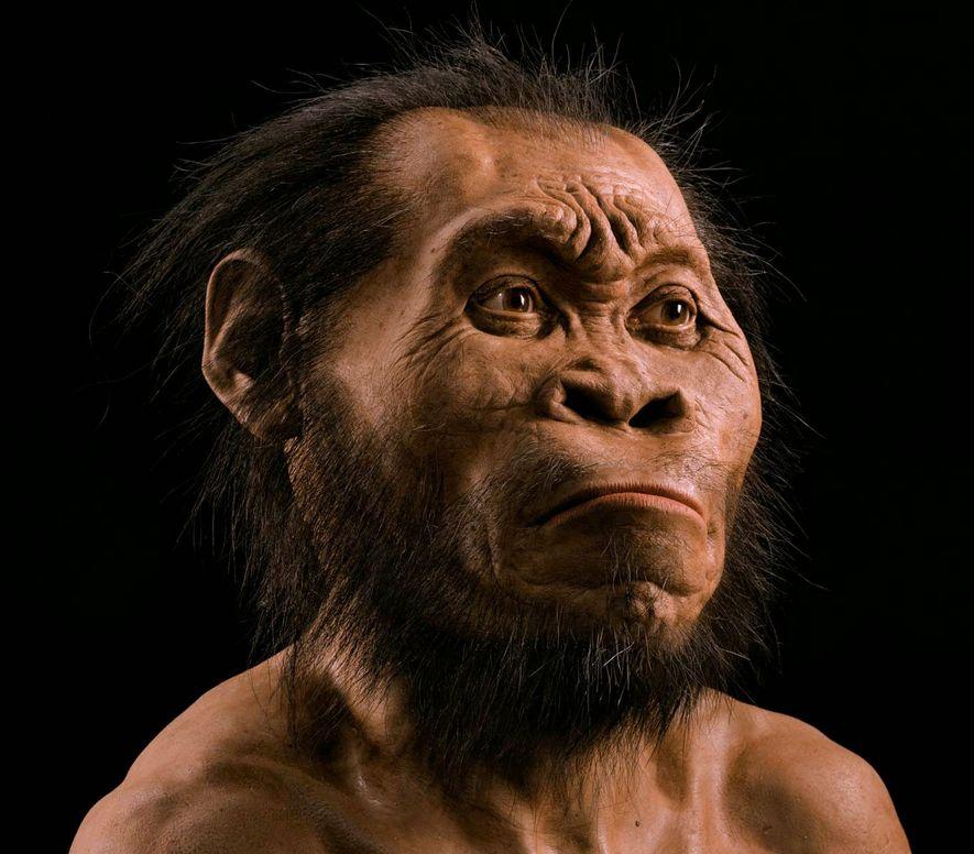 Los restos del Homo naledi han provocado fuertes discusiones de exactamente cómo se ajusta a nuestro árbol genealógico de la evolución.