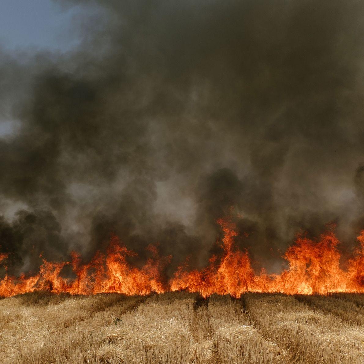 El fuego arde a través de un campo de trigo en Madhya Pradesh, India. La región ...