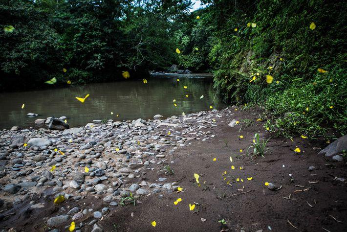 El río Pampe como aparece hoy. En mayo de 2016, nueve mil galones de melaza se ...