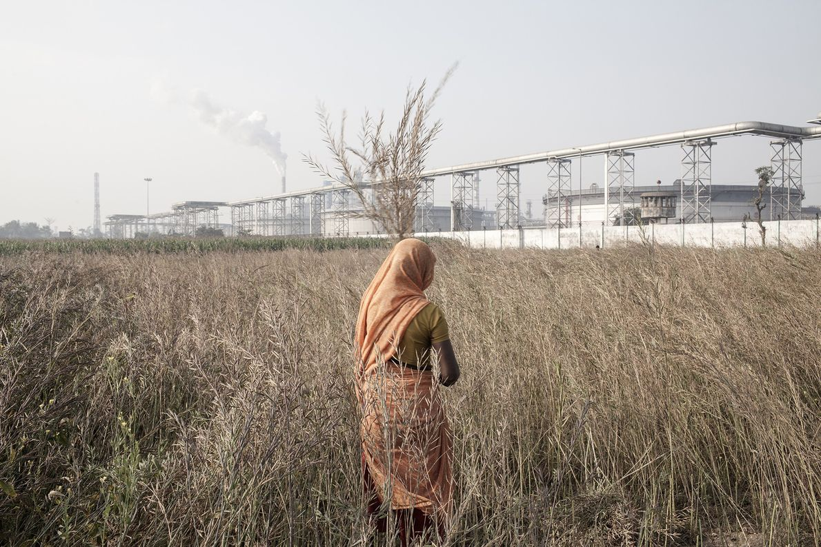 Una mujer recoge hojas de mostaza en un campo en frente de una refinería de petróleo ...