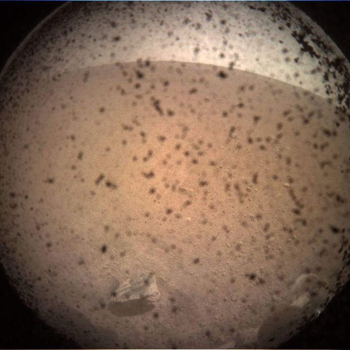 La sonda espacial Insight de la NASA envió su primera foto de la superficie marciana justo ...