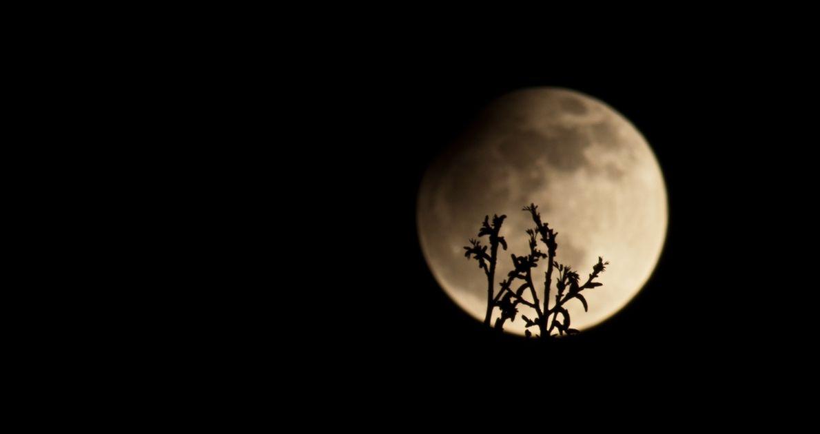 Un eclipse parcial de luna el 25 de abril del 2013. Los astrónomos pueden predecir cuándo ...