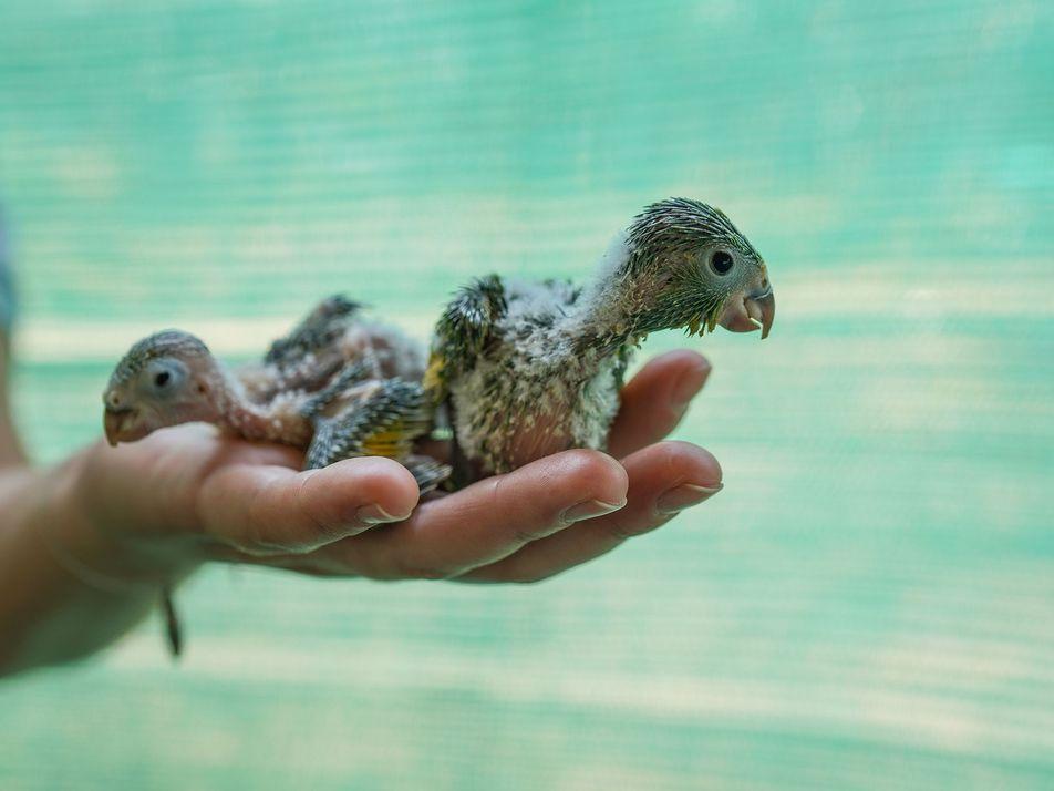 Animales afectados por los incendios de la Amazonía
