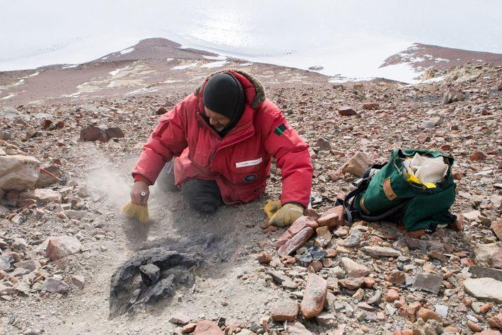 En las laderas de Graphite Peak, Rudolph Serbet descubre un tocón de árbol petrificado de 250 ...
