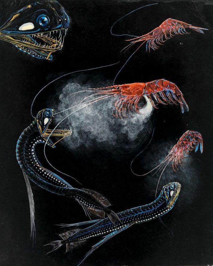 Los camarones y los peces nadan en las profundidades del Atlántico.