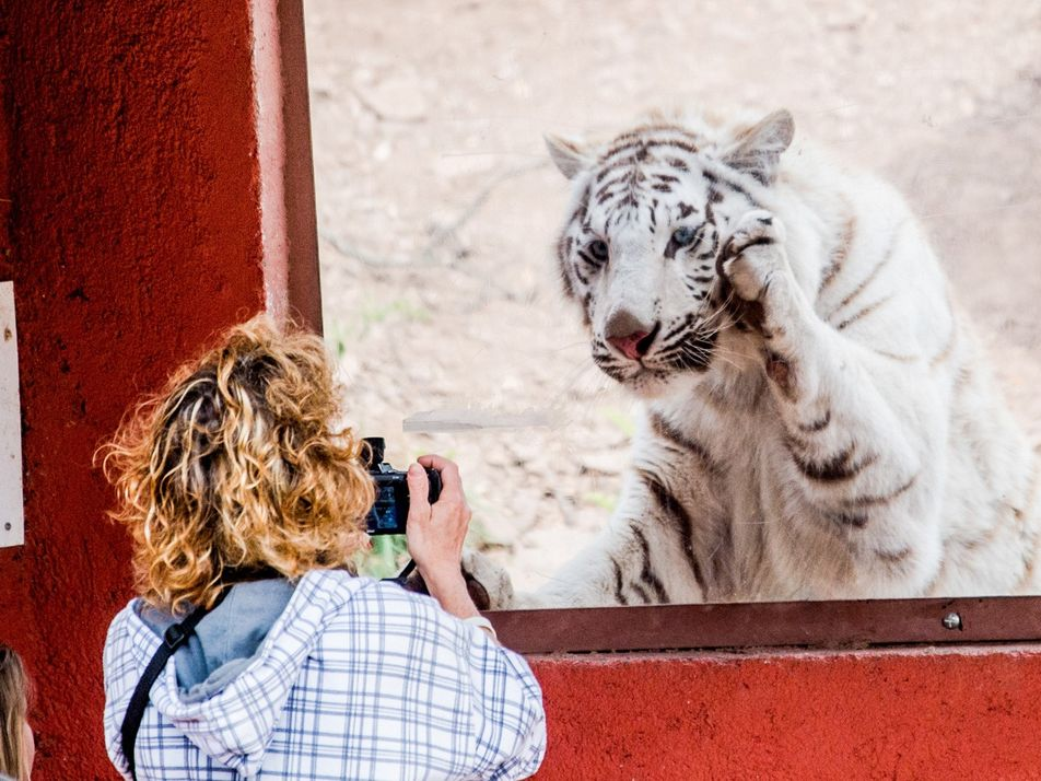 ¿Por qué la gente arriesga su vida para sacarse selfies con animales?