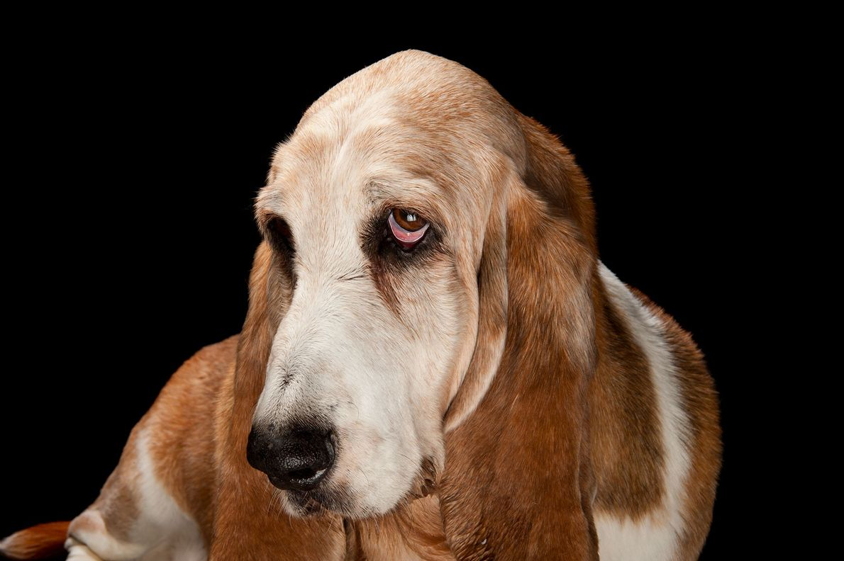 05-galeria-perros