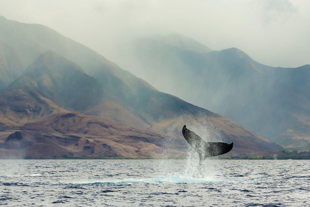 La creación de santuarios marinos comenzó en 1972 con la Ley de Protección, Investigación y Santuarios ...