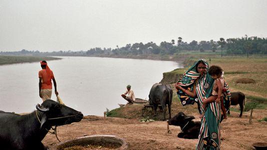 El río más sagrado de India se está agotando