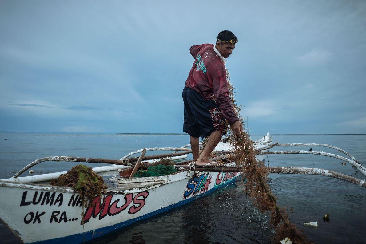 Las algas son otro producto recolectado a nivel local, que también depende de la salud del ...