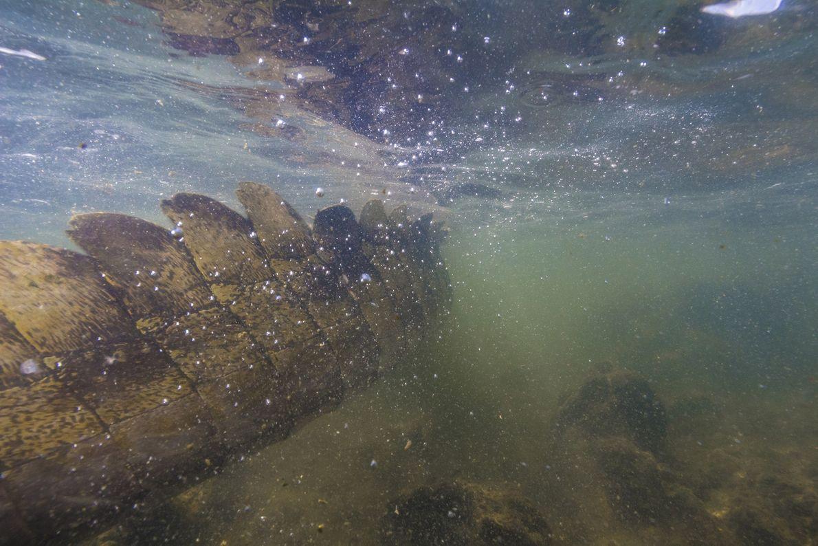 Los cocodrilos del Nilo son considerados animales muy feroces. Suelen acechar en lagos y ríos.