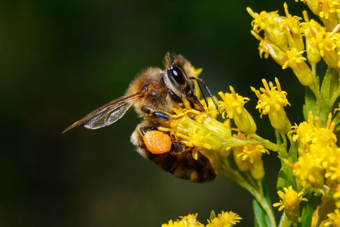 Pantalones de polen