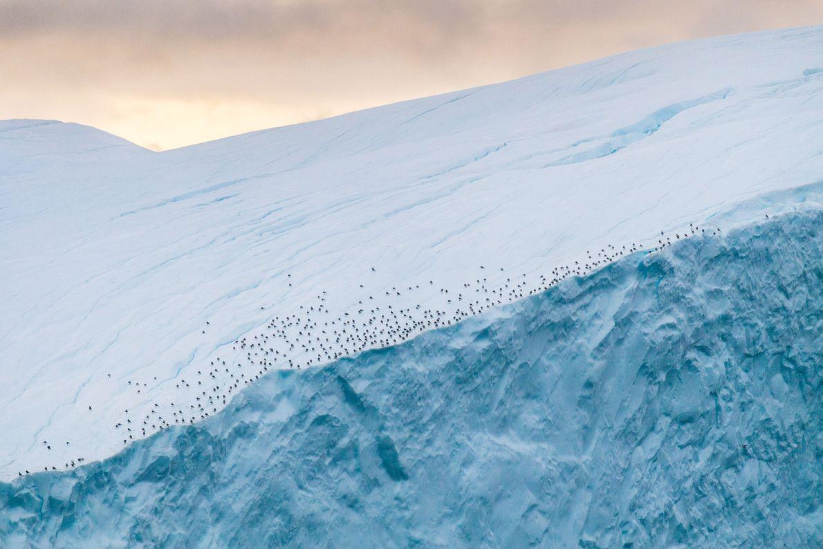 Unas aves descansan al borde de un iceberg cerca de Ilulissat Icefjord en Groenlandia.