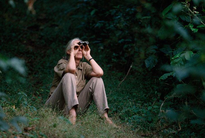Jane Goodall ya no pasa mucho tiempo en el Gombe Stream National Park, pues se ha ...