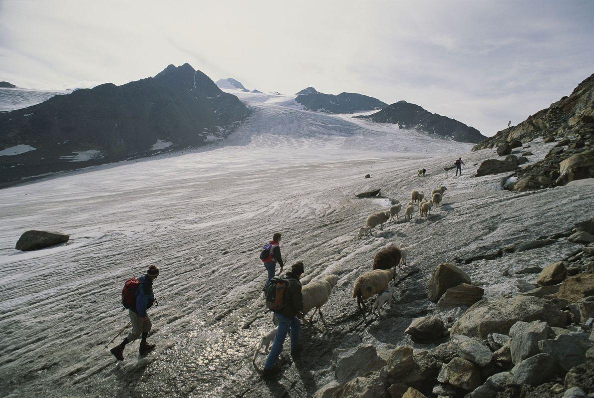 Los pastores modernos cruzan el paso alpino donde se encontraron los restos del hombre de hielo.