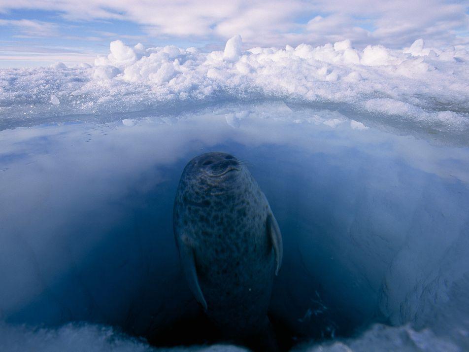 Fotos que revelan cómo viven los animales polares en los lugares más fríos de la Tierra