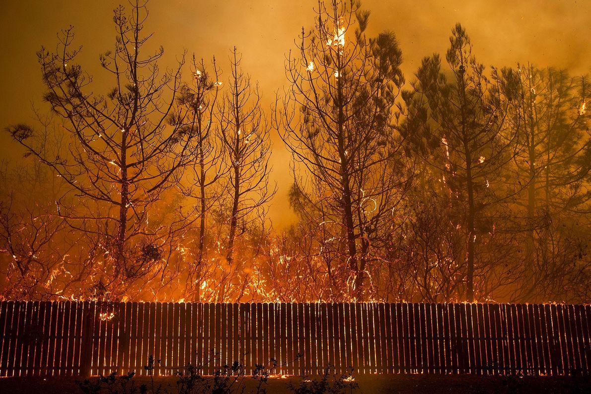 Un incendio forestal quema árboles en Paradise, California, el 8 de noviembre. Las condiciones de sequía ...