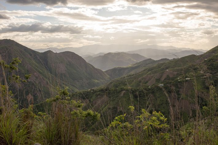 Un mosaico de cultivos de maíz destruidos por la sequía cubre las empinadas laderas de las ...