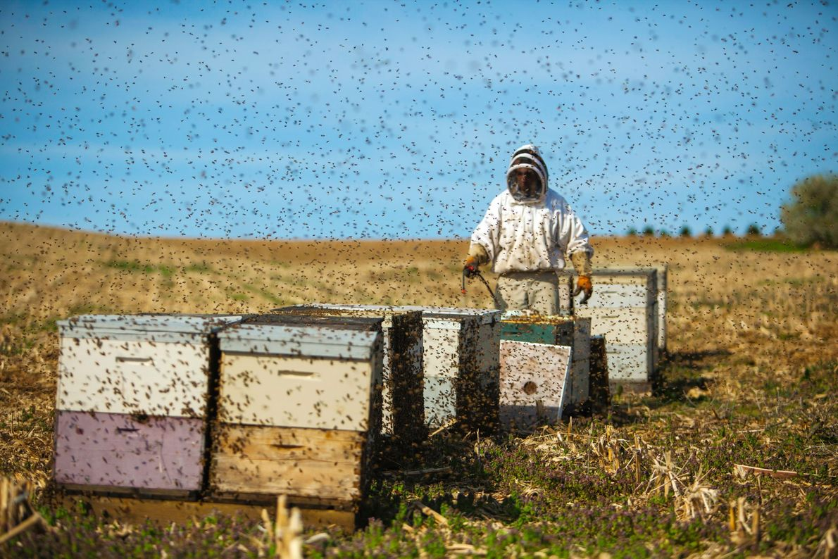 Abeja o no abeja